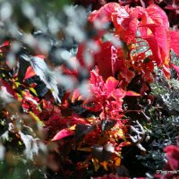 городские цветы-клумбы и газоны :: Олег Лукьянов
