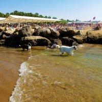 Собаки-рыболовы... :: Sergey Gordoff