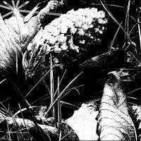 НОЧНОЙ НАТЮРМОРТ :: Валерий Викторович РОГАНОВ-АРЫССКИЙ