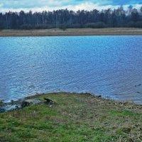 Река Оредеж :: Натали Пам