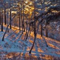 Вечер в сосновом лесу :: Анатолий Иргл