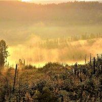 Солнечный гребень для тумана :: Сергей Чиняев