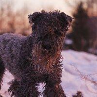 Собака :: Мария Егорова