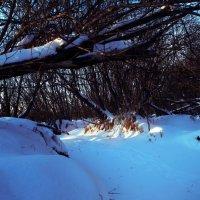 Зимушка зима :: Anastasia K.