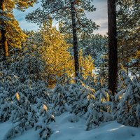 В лучах заходящего солнца :: Андрей Поляков