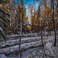 Декабрь в лесу :: Андрей Дворников