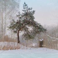 Зимний лес :: Руслан Комаров