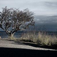 Еще одно дерево :: Alena Nuke