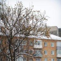 Красноярск :: Мария Сидорова
