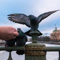 Одноглавый орел :: Антон Смульский