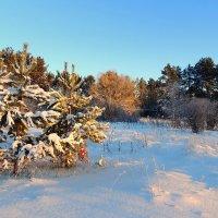 Солнечное, зимнее утро :: Павлова Татьяна Павлова