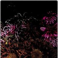 Задумчивые хризантемы :: Нина Корешкова