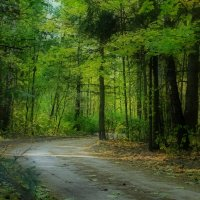 Таинственный лес :: оксана