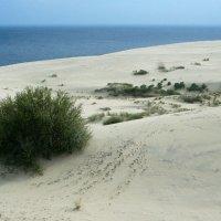 Долгая дорога в дюнах :: lady-viola2014 -
