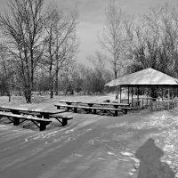 Столы накрыты для зимы. :: владимир