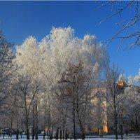 Седой декабрь :: Виктор Марченко