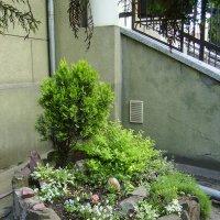 Декоративная   клумба  в   Ивано - Франковске :: Андрей  Васильевич Коляскин