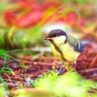 С грудкой желтой знаем птицу, называется синица :: Богдан Петренко