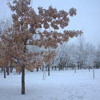 В снегу :: оксана косатенко