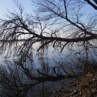 Дерево любуется своим отражением. :: Галина