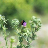 Beetle :: Владимир Лазарев