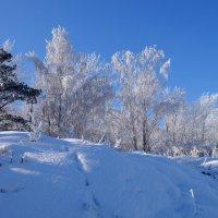 Зима. Мороз. Декабрь. :: Rafael