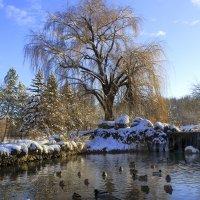Пруд в Ботаническом саду КФУ :: Михаил Баевский