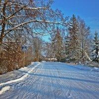 Морозный день :: Натали Пам