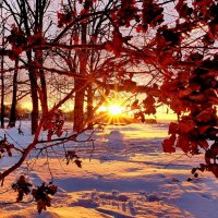 Солнце декабря :: Александр