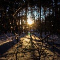 Forest :: Atika Akimoto