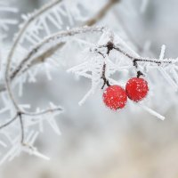 Контрасты зимы :: Cергей Дмитриев
