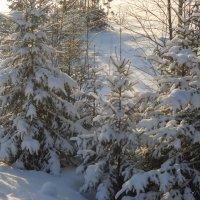 В зимнем лесу :: Александр Попков