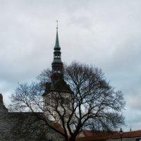 Таллин декабрь 2016 :: Евгения К