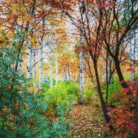 Осенний лес :: Анна Дорофеева