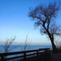Зеленоградск - вид на море с Набережной :: Маргарита Батырева