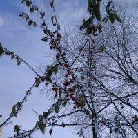 Зима :: Аlexandr Guru-Zhurzh