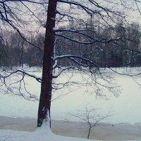 Сплетение ветвей. :: Miko Baltiyskiy