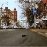 Говорят не повезёт если чёрный кот дорогу перейдёт. :: Anatol Livtsov