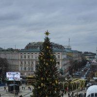 Главная елка Киева. :: Svetlana