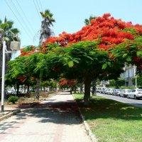 Дерево :: mikhail