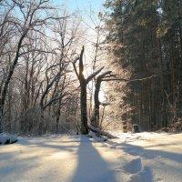 В зимнем сказочном лесу :: Андрей Заломленков