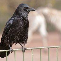 Страж зоопарка :: Alexander Andronik