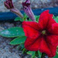 Люблю цветы :: Kristina Suvorova