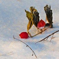 Фонарики на снегу :: Людмилаfdnjgjhpnhptn