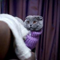 .. за свитер спасибо, но куда я в нём пойду? :: Лилия .