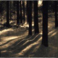 В лесу :: Станислав Лебединский