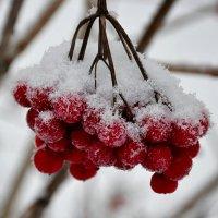 Новогодние витамины :: Милешкин Владимир Алексеевич
