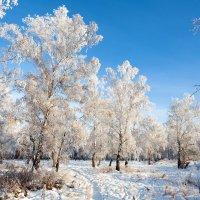 Мороз и солнце. День прекрасен... :: Анатолий Иргл