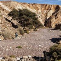 Красный каньон(Эйлат) :: Евгений Дубинский