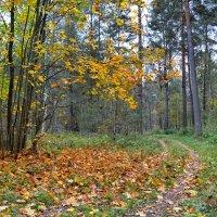 В осеннем лесу :: Милешкин Владимир Алексеевич